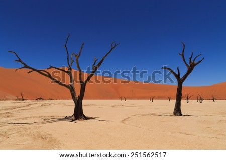 Dead Vlei, Sossusvlei Namibia - stock photo