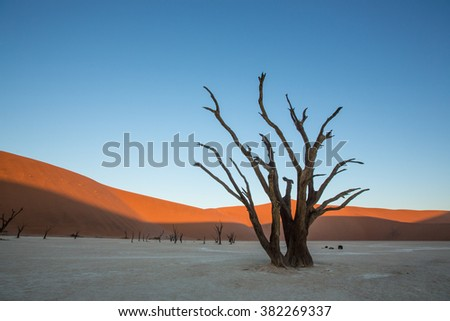 Deadvlei landscape in Namibia - stock photo