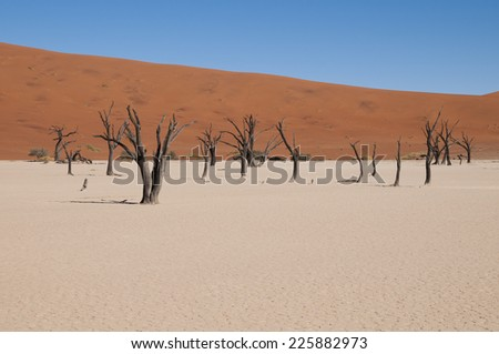 Deadvlei, Namib Naukluft Nationalpark, Namibia - stock photo