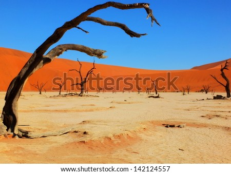 Deadvlei surrounded by some of the highest sand dunes in the world, Namib-Naukluft Park in Namibia - stock photo