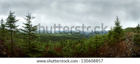 Deap forest Panorama - Reforestation - stock photo