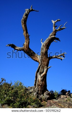 death tree - stock photo