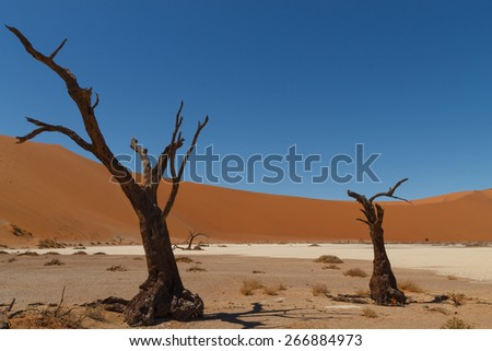 Death tree with red dunes from Hidden Vlei, Sossusvlei Namibia - stock photo