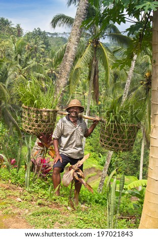 December 31, 2013, Indonesia, Bali. December 31, 2013, Indonesia, Bali. happy farmer working in the field - stock photo