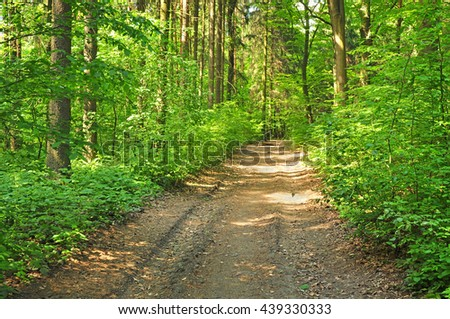 Deciduous forest path trees - stock photo