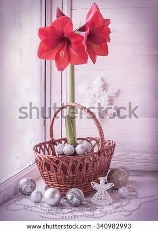 Decor winter window with Hippeastrum (amaryllis) waiting for Christmas. Retro toning. - stock photo