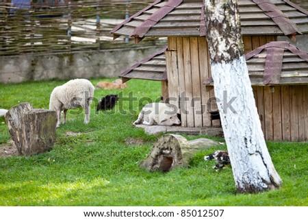 Decorated sheep farm. - stock photo