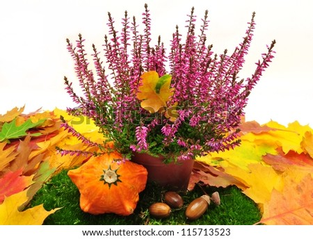 Decoration - autumn purple heather and colorful leaves - stock photo