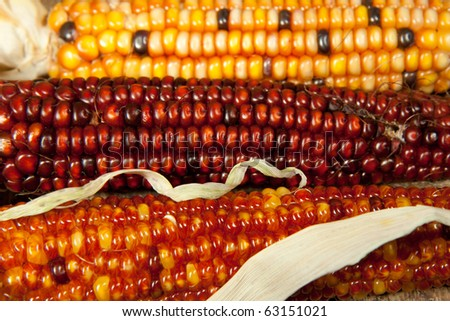 Decoration corns close up as a background - stock photo
