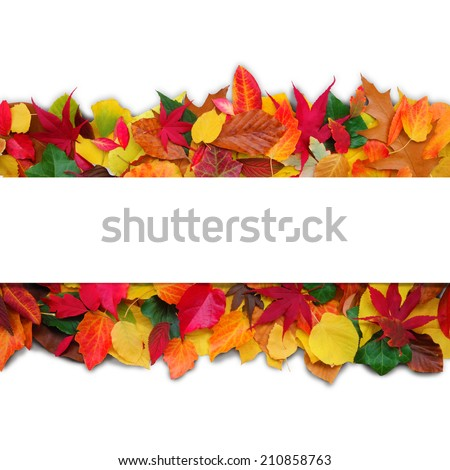 decorative autumn image with copy space for your text - stock photo