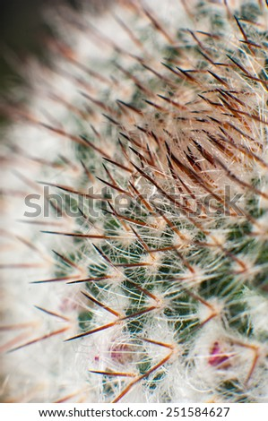 Decorative cactus, macro. - stock photo