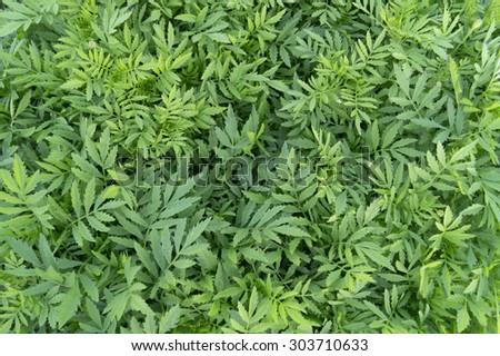 Decorative flowers green fresh foliage background texture - stock photo
