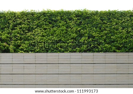 Decorative garden on a brick fence isolated on white background - stock photo
