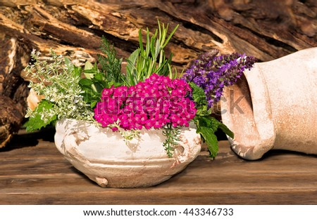 Decorative Herbs and spices from the Garden in a earthen pot. - stock photo