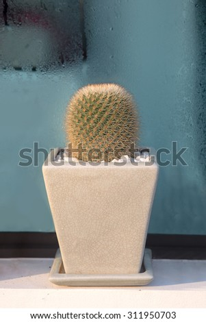 Decorative house with Tiny cactus in flower pot near by the window in the morning - stock photo