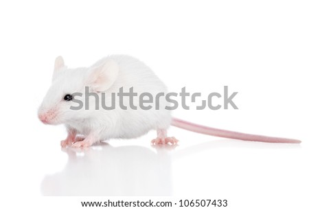 Decorative mouse on a white background. Macro shoot - stock photo