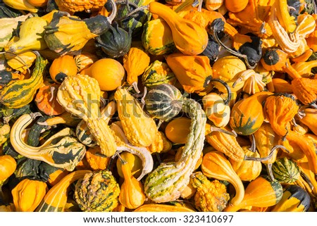Decorative pumpkins and gourds. Autumn harvest background. - stock photo