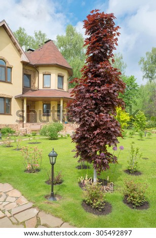 Decorative red maple tree on the lawn in front of house - stock photo