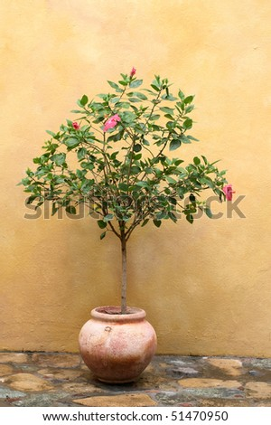 decorative tree with pink lilies in clay pot against stucco wall - stock photo