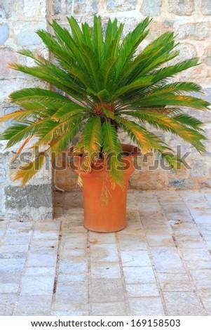 Decorative vegetation pot inside old Mediterranean town - stock photo