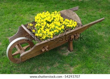 decorative wooden wheelbarrow with yellow pansies - stock photo