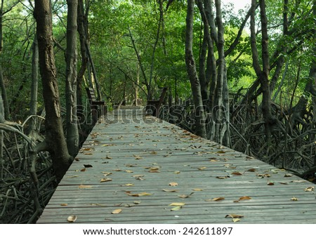 Deep Forest with Wooden Walk Path - stock photo