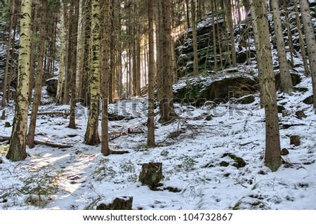 Deep in the snowy forest - stock photo