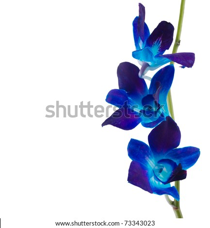 deep purple orchid isolated on a white background - stock photo
