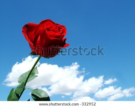 Deep Red Rose Against Deep Blue Sky - stock photo