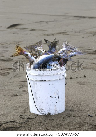 Deepnetting for King Salmon in Kenai, Alaska - stock photo