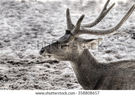 deer and horn - stock photo