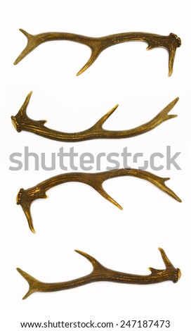 Deer antlers, a rare trophy for any hunter. - stock photo
