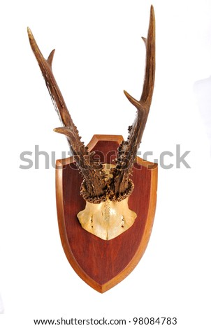 Deer antlers isolated on white - stock photo