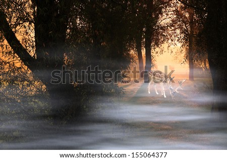 Deer at a foggy morning in sunrise - stock photo