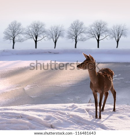 deer doe and  snowy landscape - stock photo