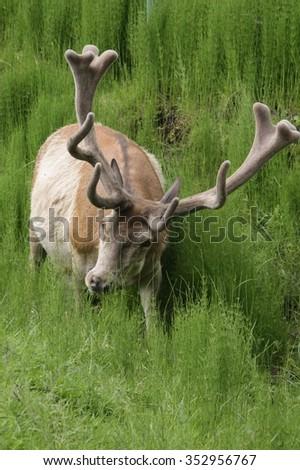 deer family - stock photo