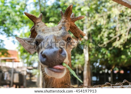 deer in a zoo - stock photo