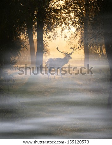 Deer in autumn forest at a cold foggy morning - stock photo