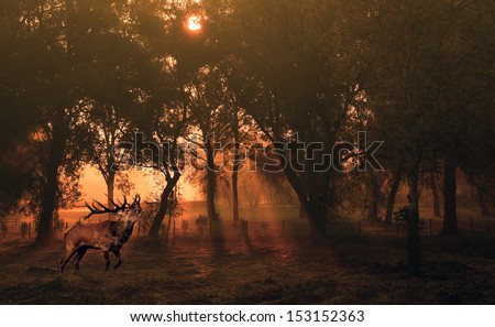 Deer in autumn forest at sunrise - stock photo