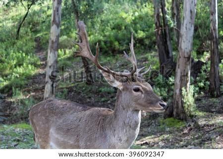 Deer in field - stock photo