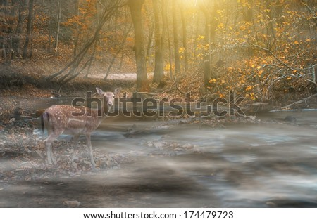 Deer in foggy forest belong river - stock photo