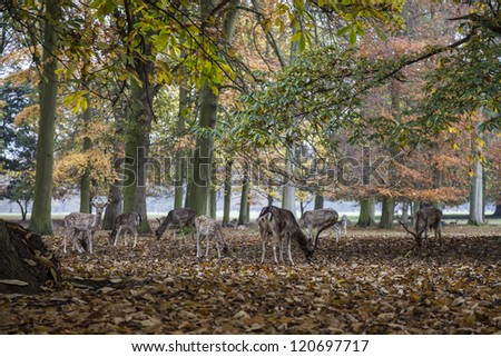 Deer in Holkham Hall Grounds in Autumn - stock photo