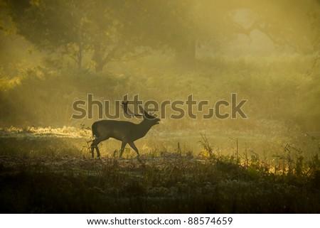 Deer in sunlight - stock photo