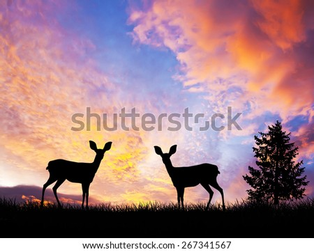 deer in the field - stock photo