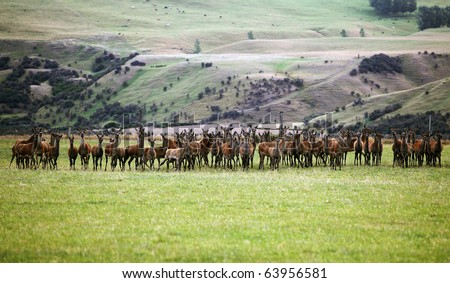 deer in the forrest against blue sky - stock photo