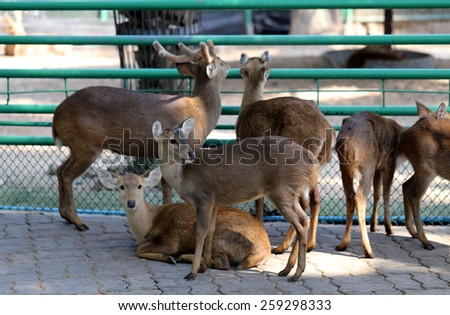 Deer in the zoo photographed close up - stock photo