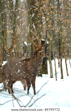 Deer is in the winter forest - stock photo