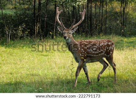 Deer on a background of wild nature.  - stock photo