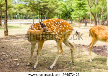 Deer patterned lovely spot deer in the wild outdoors. - stock photo