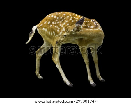 Deer patterned spots deer isolated on black background. - stock photo